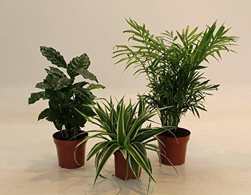 Indoor-Pflanzentrio ideal für Büroräume geeignet