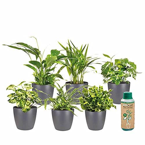 Ecoworld Luftreinigende Zimmerpflanzen, 6er Set - Verschiedene Arten, zur Deko &...
